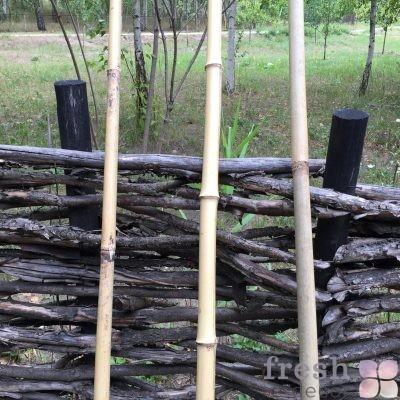 бамбуковые палки в прокат
